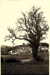 Capa de Livro: A Norte de Casa